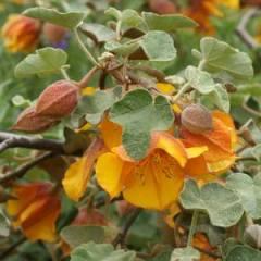 WOODSIDE LIBRARY NATIVE PLANT GARDEN PLANT LIST